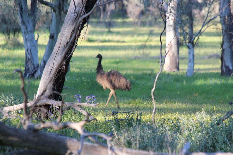 Kookaburra Creek Gallery